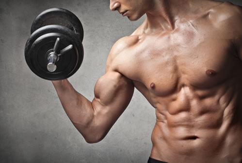 Getting your basic muscle building tips in place